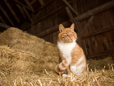 Yard/Stable Cats